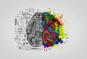 cerebro de colores